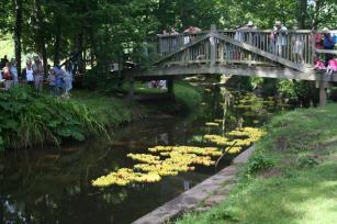 The Duck Race in the Byes at Sidmouth - July 2010