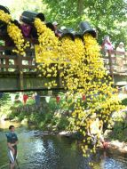 Launching the yellow ducks at the July 2010 Duck race
